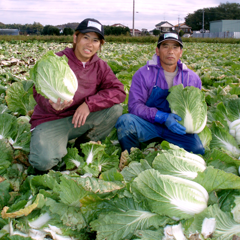 白菜生産者