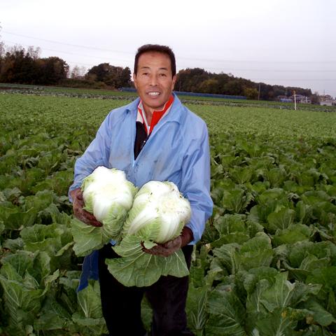 白菜生産者2