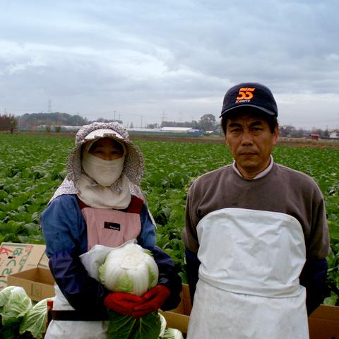 白菜生産者3