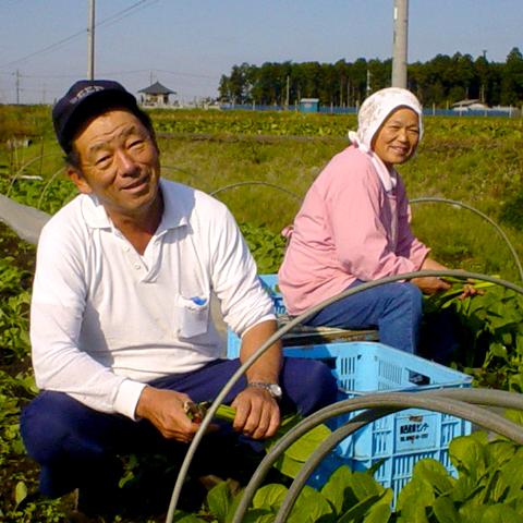 小松菜の生産者