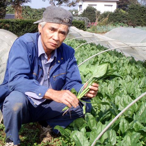 小松菜の生産者2