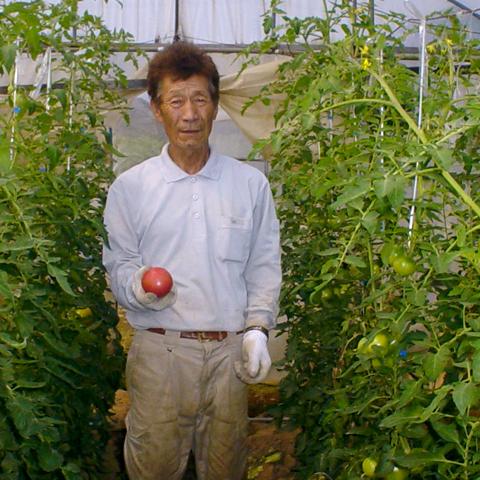 トマト生産者1