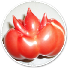 トマト太郎